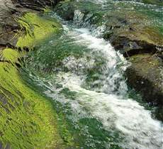 Lakesuperiorstreams Nutrients Amp Eutrophication Impacts